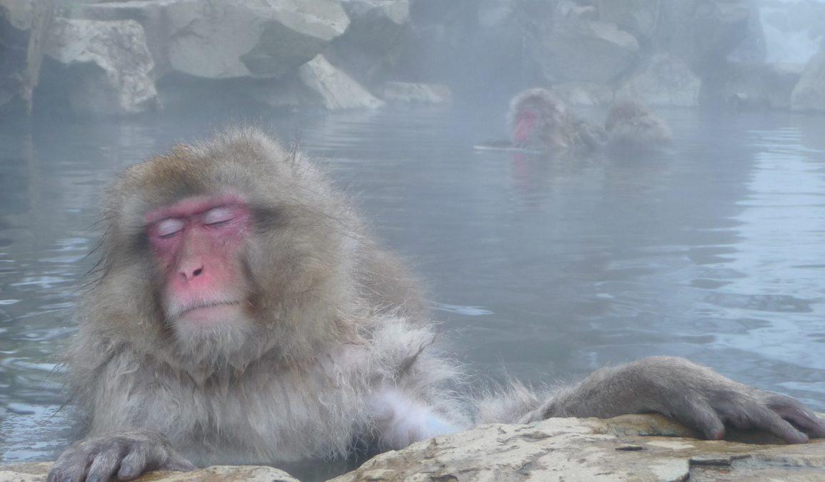 The Earth Monkey